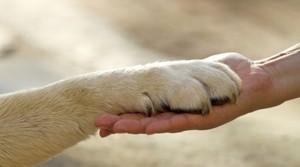 <!--:it-->La questione animalista e i diritti degli animali<!--:-->
