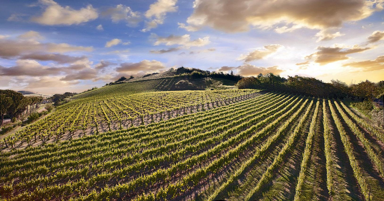 agroalimentare in italia