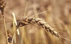 Una dieta ricca di fibre: un toccasana per la salute