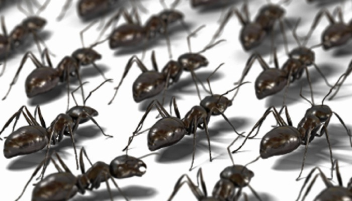 L arte della guerra delle formiche comunicazione scientifica - Formiche in bagno ...