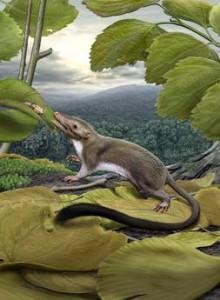 <!--:it-->Il primo mammifero<!--:-->