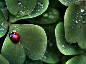 <!--:it-->È possibile conservare la natura? <!--:-->